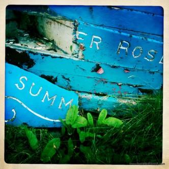 Summer Rose