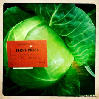 Competition Cabbage