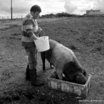 Malc tends to the pigs
