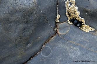 Limpet traces