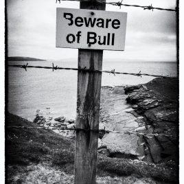 Beware of Bull - photograph (c) 2016 David Bailey (not the)