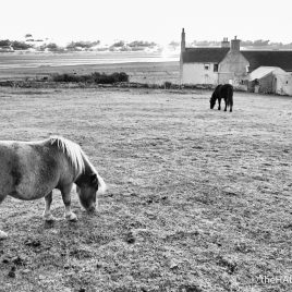 Happy horses grazing - photograph (c) 2016 David Bailey (not the)