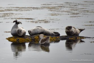 Common Seals - me after dinner - The Hall of Einar - photograph (c) 2016 David Bailey (not the)
