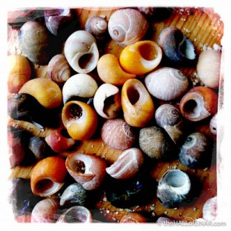 Periwinkles - photograph (c) 2016 David Bailey (not the) - The Hall of Einar