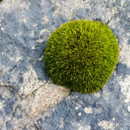 Moss - photograph (c) David Bailey (not the)