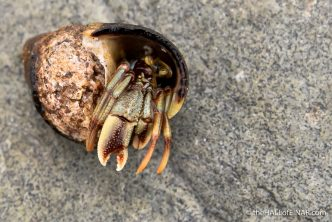 Hermit Crab - The Hall of Einar - photograph (c) David Bailey (not the)