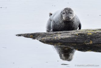 Seal - The Hall of Einar - photograph (c) David Bailey (not the)