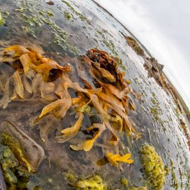 Seaweed - The Hall of Einar - photograph (c) David Bailey (not the)