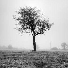 Lone Tree - The Hall of Einar - photograph (c) David Bailey (not the)