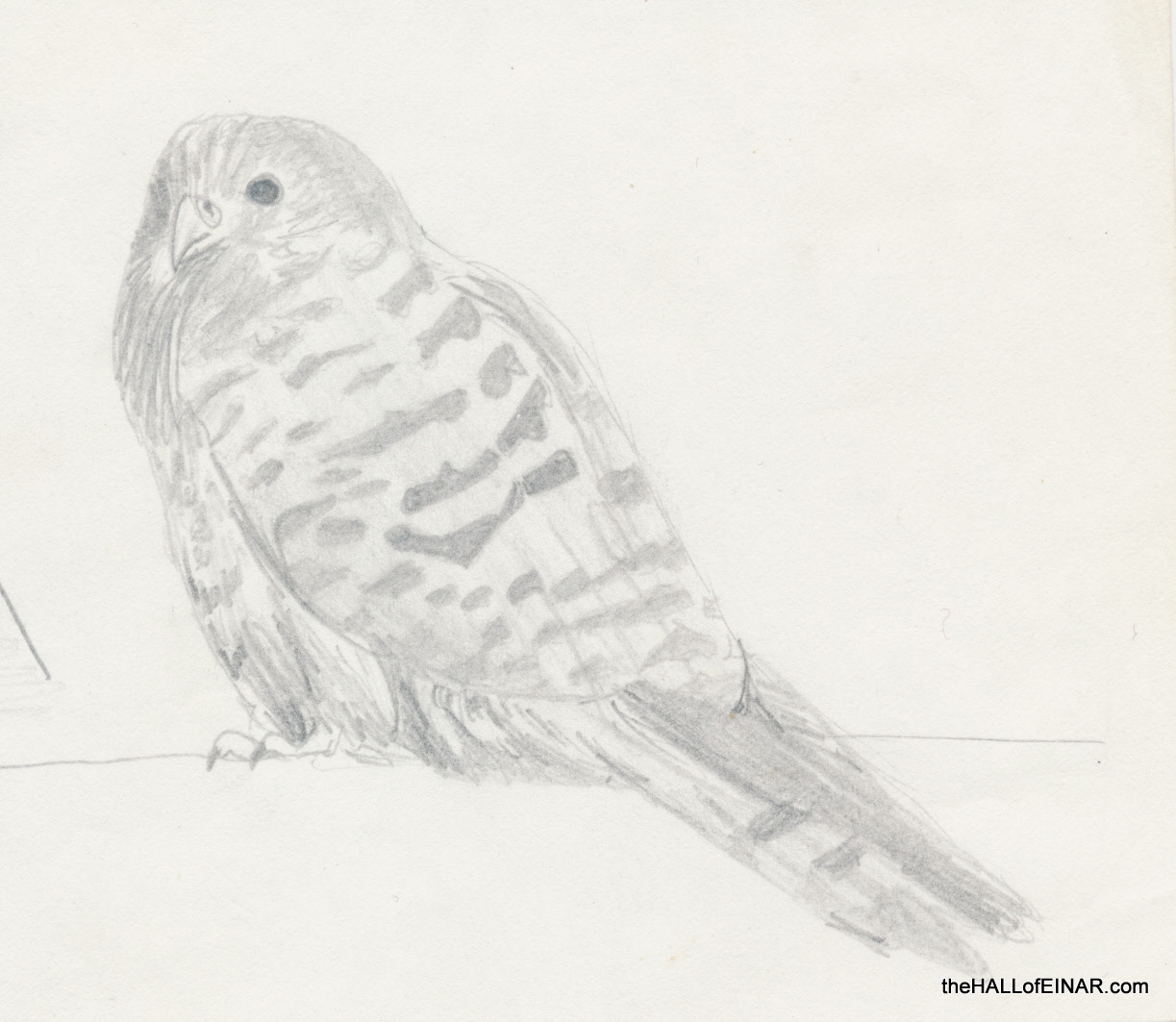 Kestrel - The Hall of Einar - drawing (c) David Bailey (not the)