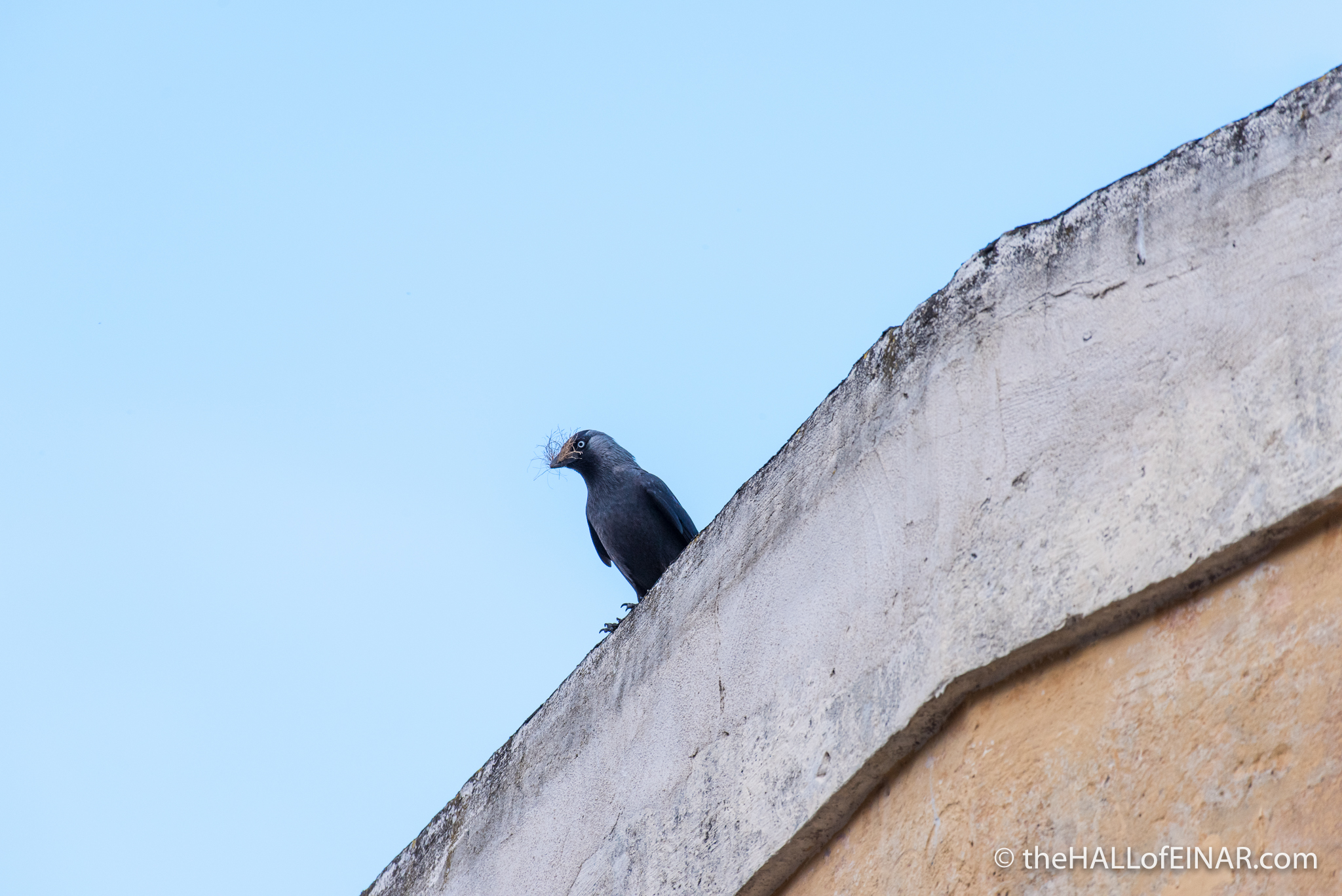 Jackdaw - The Hall of Einar  - photograph (c) david Bailey (not the)