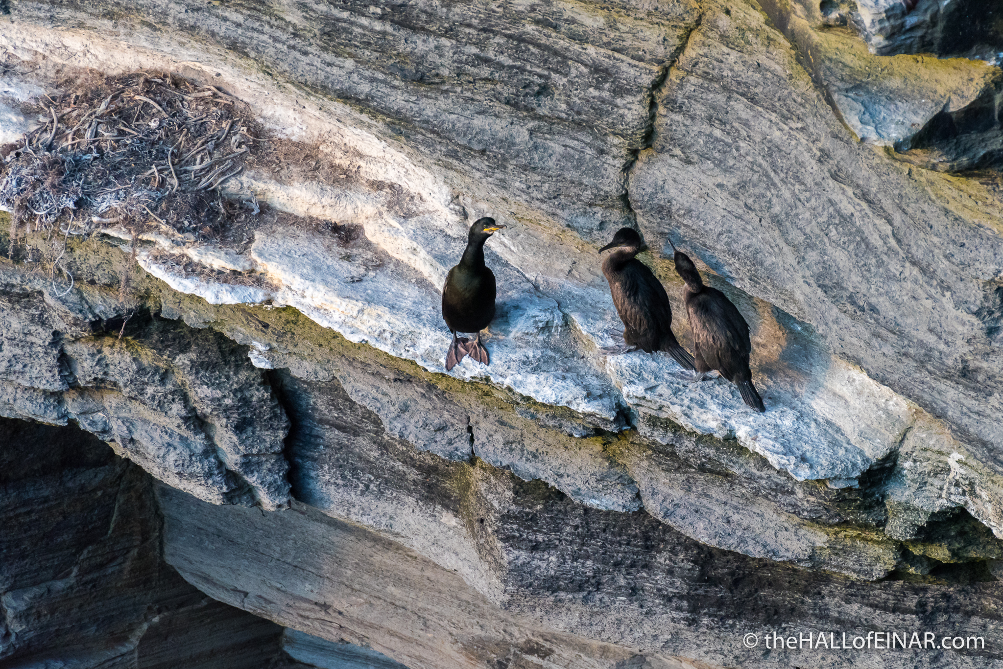 Shags - The Hall of Einar - photograph (c) David Bailey (not the)