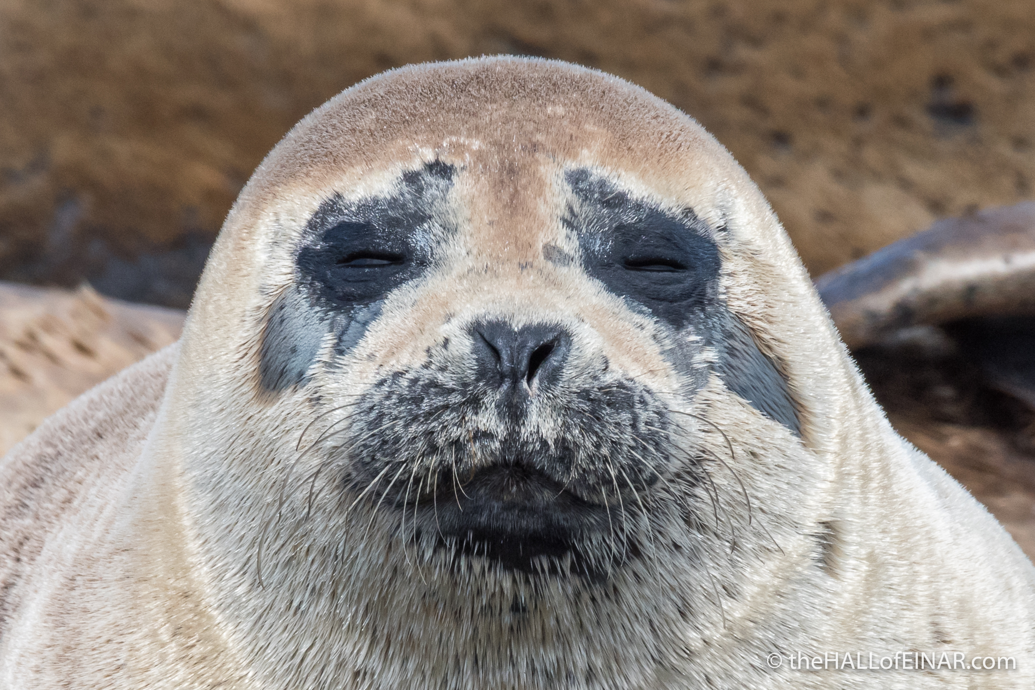 The Seal of Approval – the HALL of EINAR