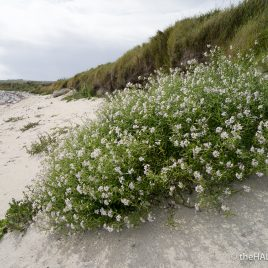Sea Rocket - The Hall of Einar - photograph (c) David Bailey (not the)