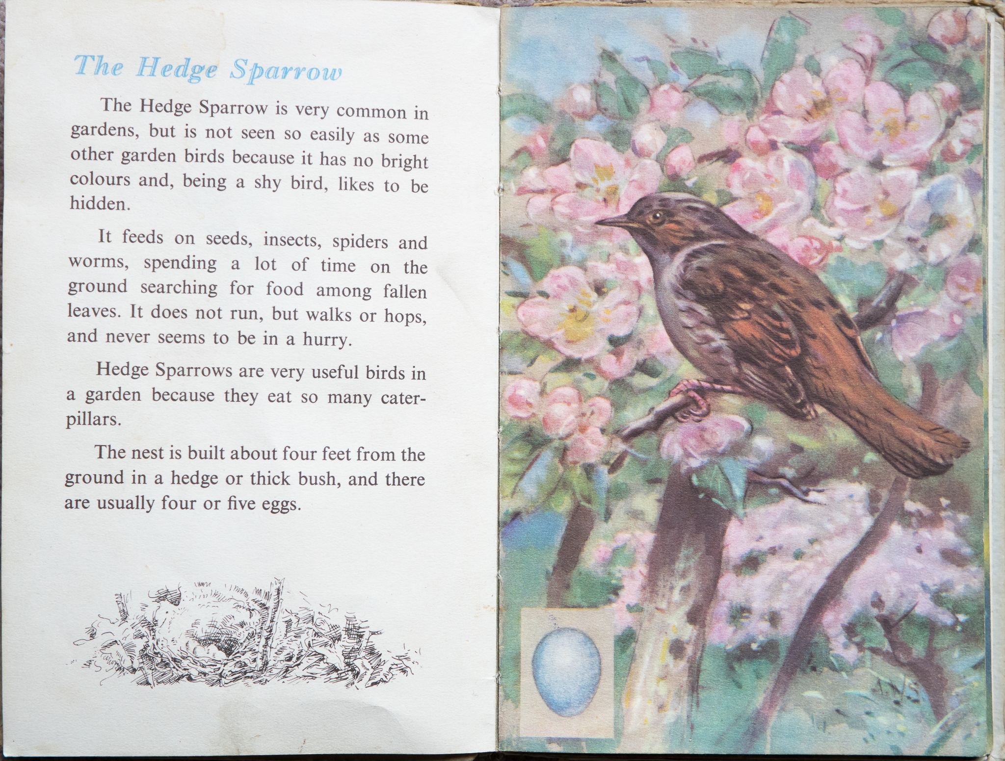 The Second Ladybird Book of British Birds - The Hedge Sparrow
