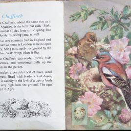 The Second Ladybird Book of British Birds - Chaffinch