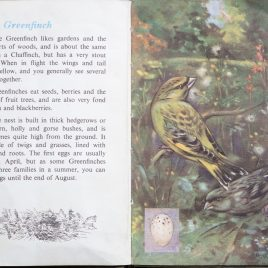 The Second Ladybird Book of British Birds - Greenfinch