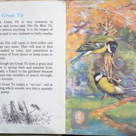 The Second Ladybird Book of British Birds - The Great Tit