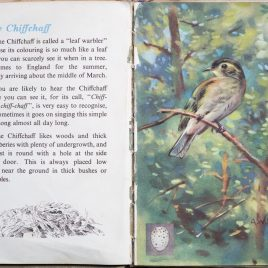 The Second Ladybird Book of British Birds - The Chief Chaff