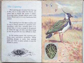 The Second Ladybird Book of British Birds - The Lapwing