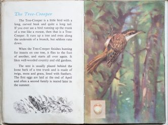 The Second Ladybird Book of British Birds - The Treecreeper