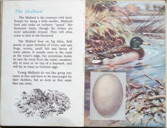 The Second Ladybird Book of British Birds - The Mallard