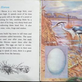 The Second Ladybird Book of British Birds - The Heron