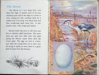 The Second Ladybird Book of British Birds - The Heron