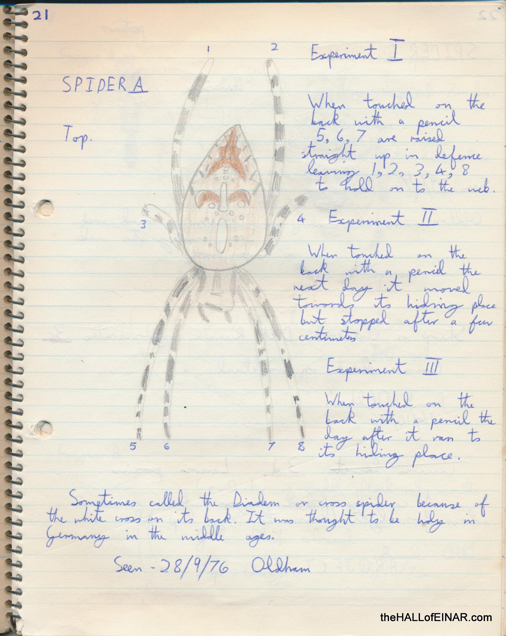 Garden Spider- The Hall of Einar - copyright David Bailey (not the)