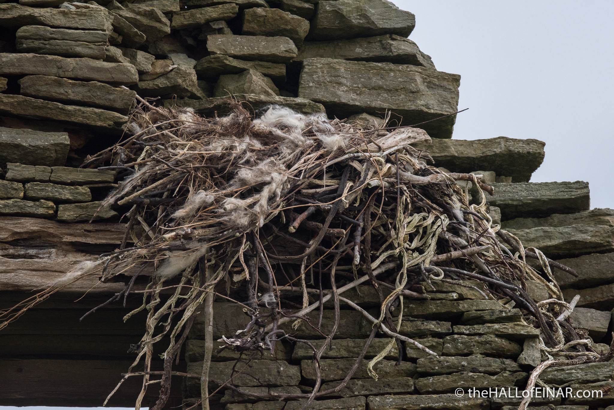 Raven's Nest - The Hall of Einar - photograph (c) David Bailey (not the)