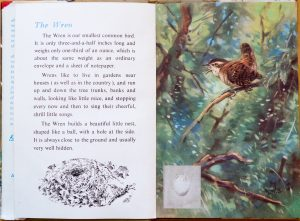The Wren - Ladybird Book of British Birds - The Hall of Einar