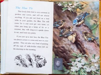 The Blue Tit - Ladybird Book of British Birds - The Hall of Einar