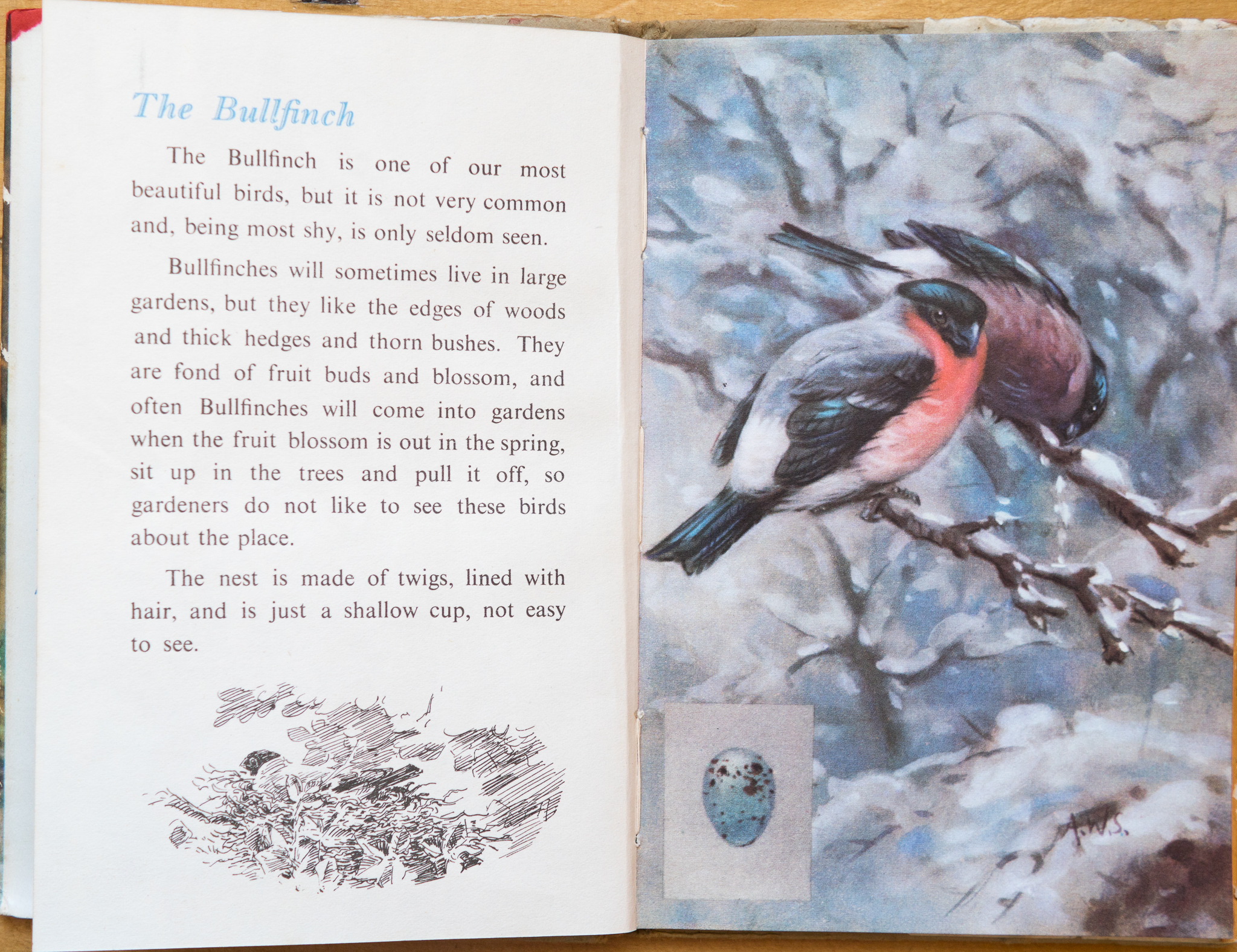 The Bullfinch - Ladybird Book of British Birds - The Hall of Einar