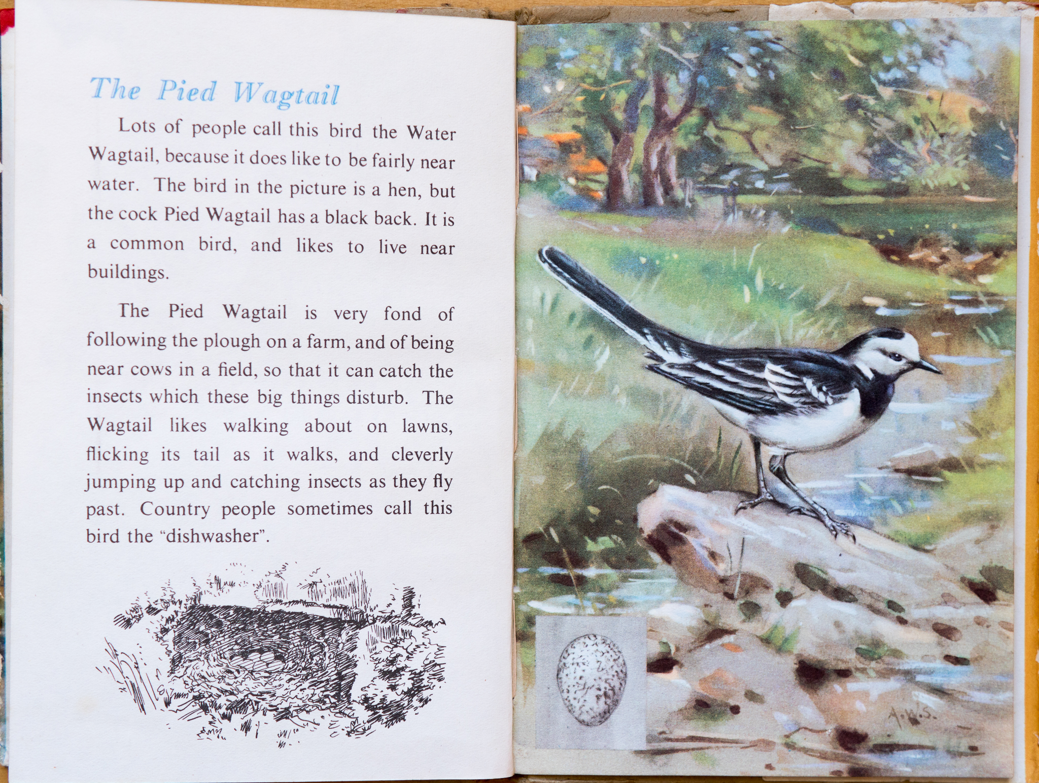 The Pied Wagtail - Ladybird Book of British Birds - The Hall of Einar