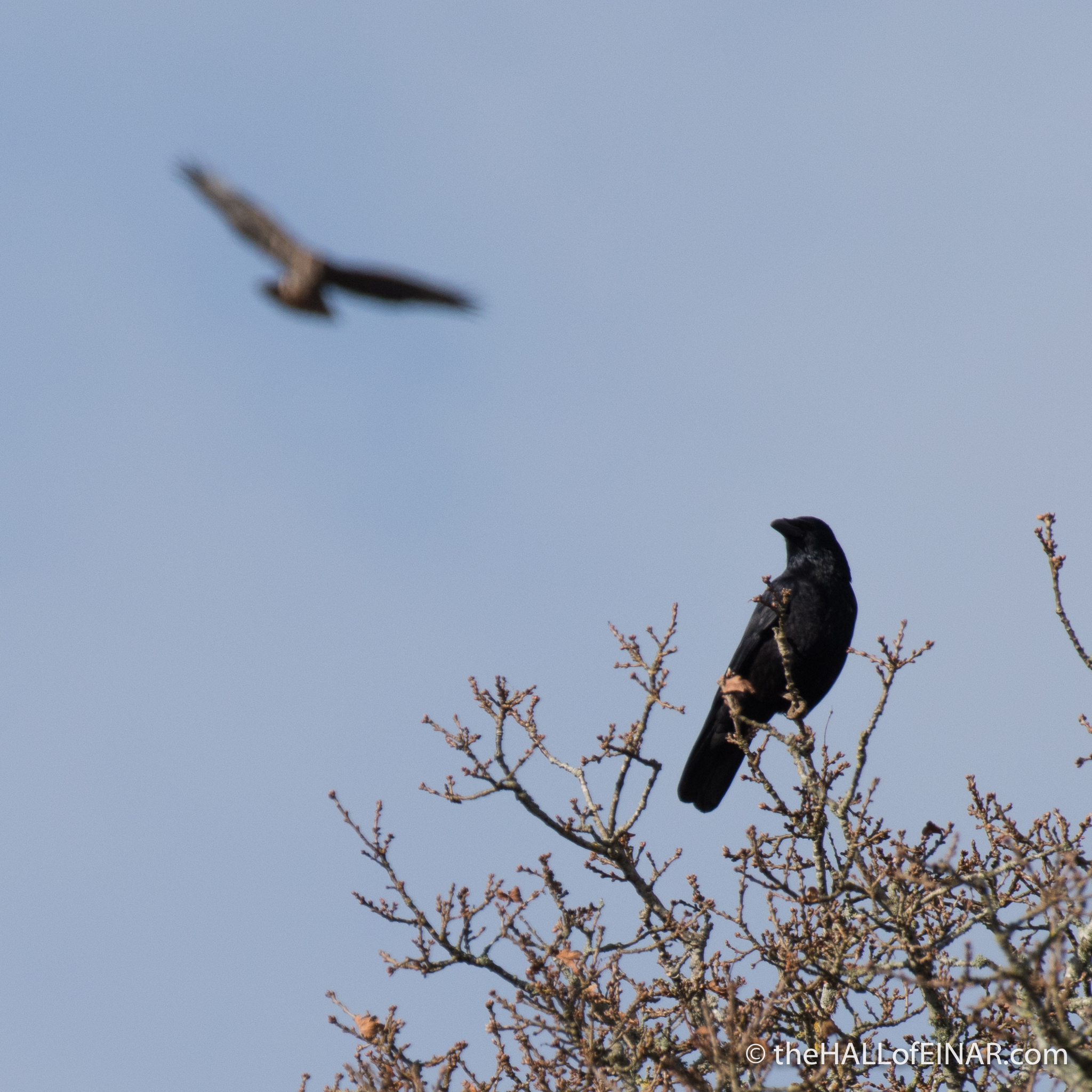 Crow and Buzzard - The Hall of Einar - photograph (c) David Bailey (not the)