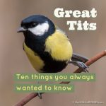 Ten things you always wanted to know about Great Tits - The Hall of Einar