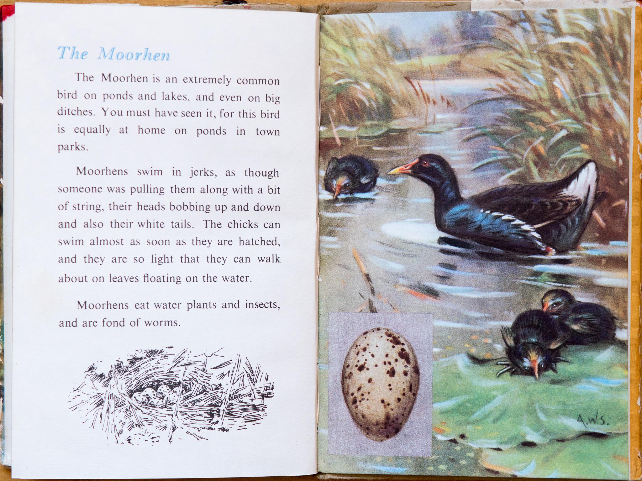 Ladybird Book of British Birds - The Hall of Einar