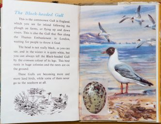 Ladybird Book of British Birds - The Hall of Einar