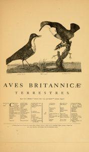 Ornithologia Britannica - The Hall of Einar