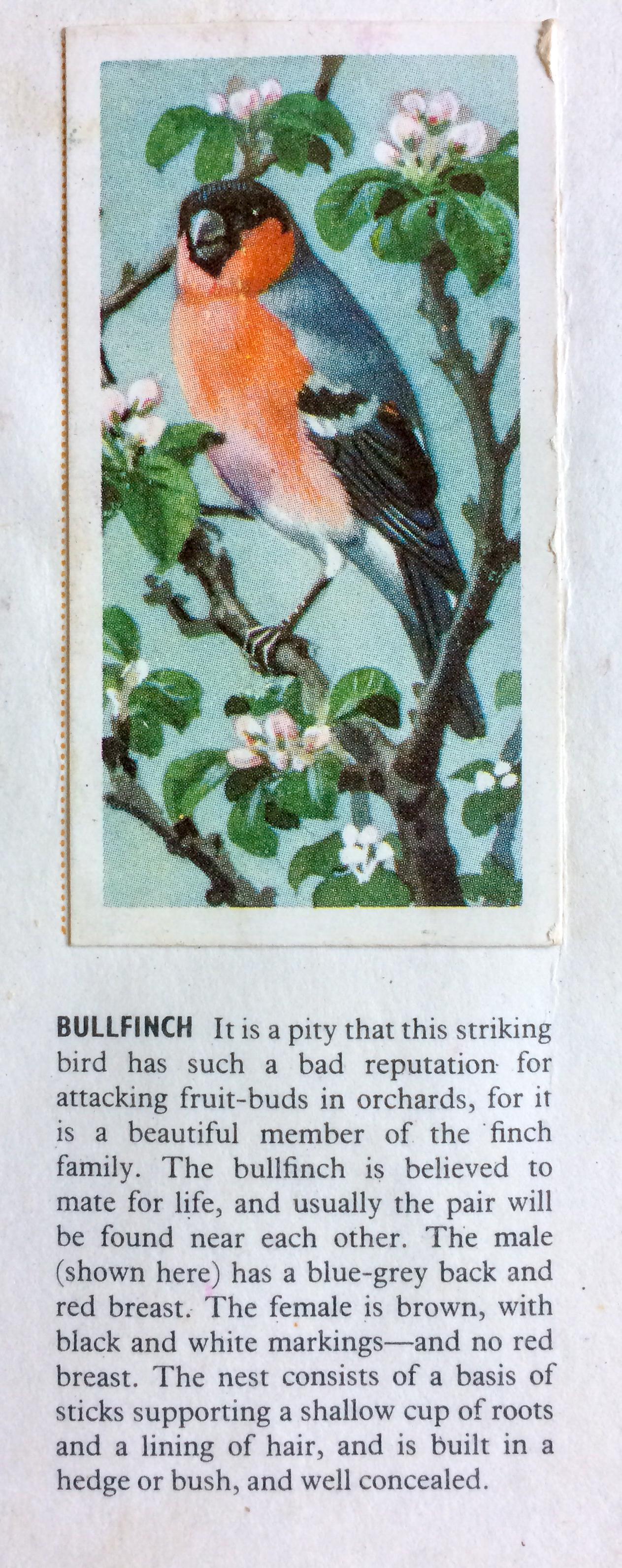 Brooke Bond - Bullfinch - The Hall of Einar - Tunnicliffe