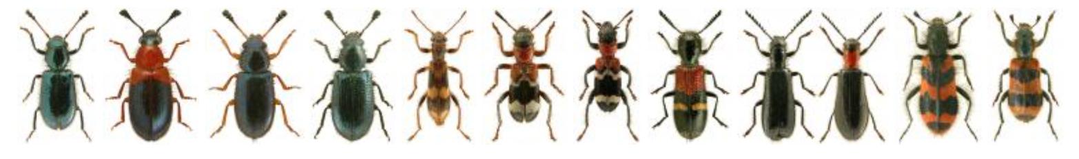 UK Beetle Recording