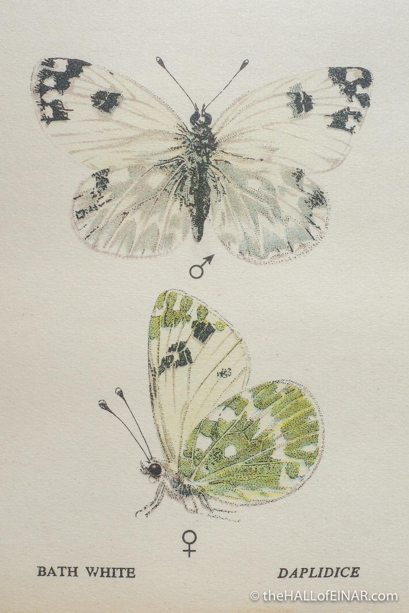 The Bath White Butterfly - Edmund Sandars