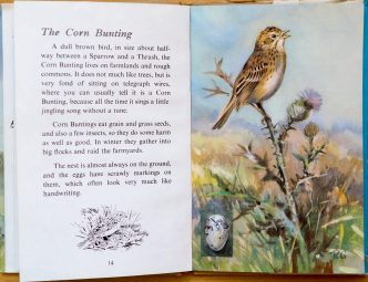 Corn Bunting - The Ladybird Book of British Birds - Roland Green