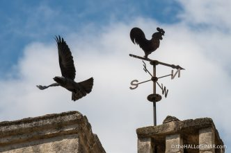 Jackdaw - Matera - The Hall of Einar - photograph (c) David Bailey (not the)