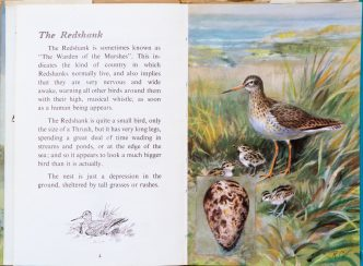 Redshank - Ladybird Book of British Birds