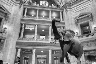 Smithsonian National Museum of Natural History - The Hall of Einar - photograph (c) David Bailey (not the)