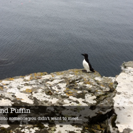 Razorbill meets Puffin - The Hall of Einar
