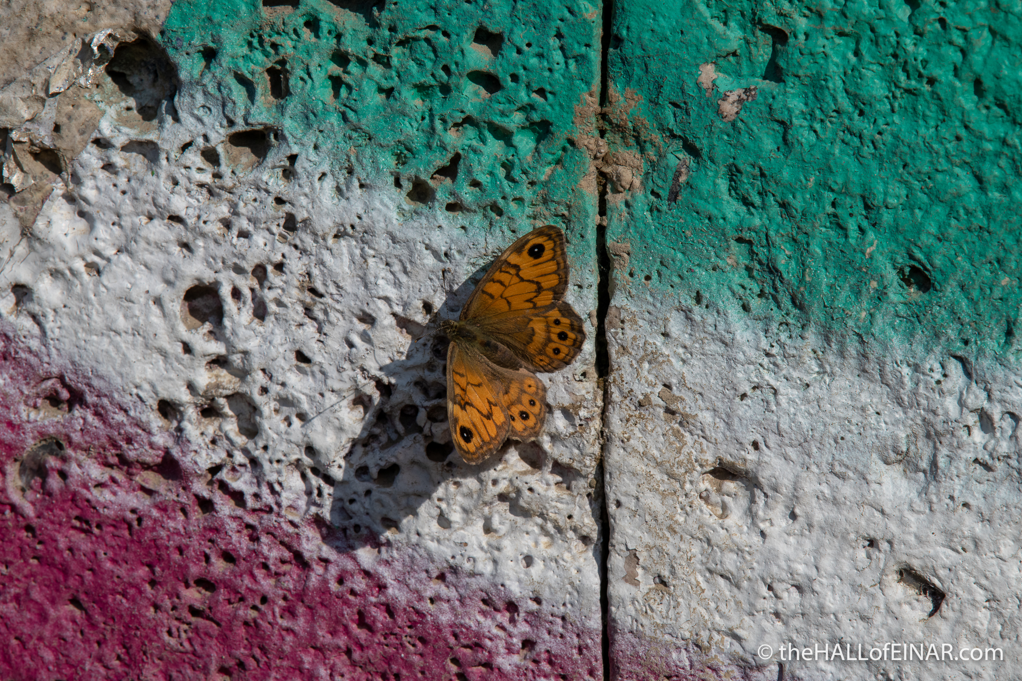 Wall Brown on the Tevere - The Hall of Einar - photograph (c) David Bailey (not the)