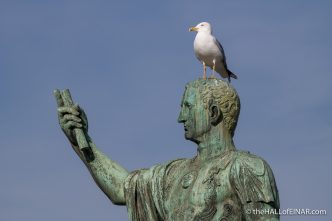Yellow Legged Gull - Rome - The Hall of Einar - photograph (c) David Bailey (not the)