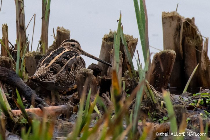 Snipe - The Hall of Einar - photograph (c) David Bailey (not the)